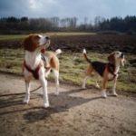 Juckreiz und Rötungen - Hund Luke leidet daran, bis sein Futter auf Grundlage des Cytolisa Tests umgestellt wird.