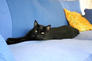 Hautveränderungen und massiver Juckreiz - Katze Lucy leidet daran. Eine Futterumstellung nach dem Cytolisa Test bringt Besserung. Kein Juckreiz mehr, gesunde Haut und gesundes Fell