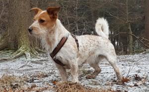 Hund Emmy bekommt Durchfall von Weizenmehl. Seit die Besitzer entsprechend dem Cytolisa Test füttern, ist sogar Mundgeruch verschwunden und das Fell schöner